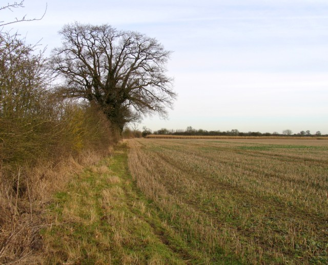 Along the hedge