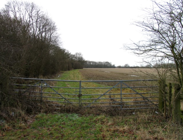 The edge of Askershaw Wood