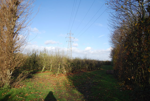 Pylon in an orchard