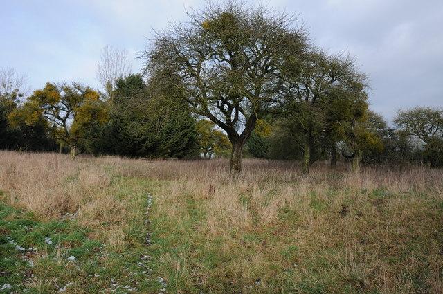 Mature orchard, Church End