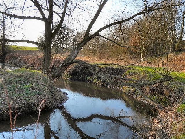 Red Brook, Partington