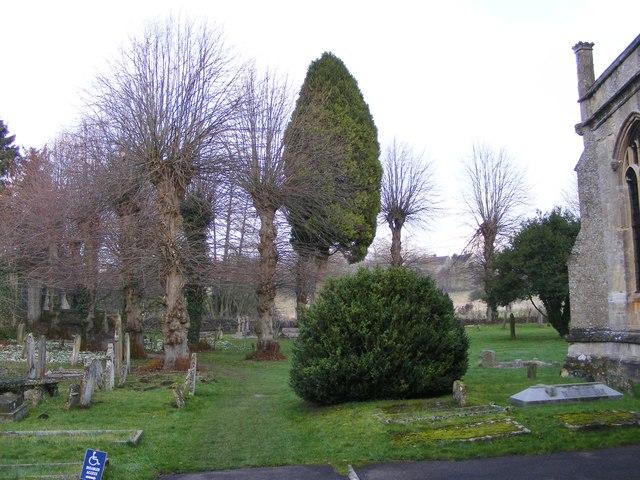 Church Trees