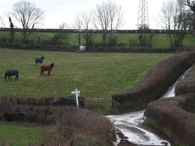 Horses grazing near Colmansford Bridge