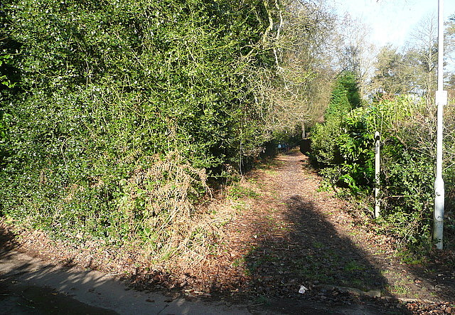 Path at Kingswood Firs