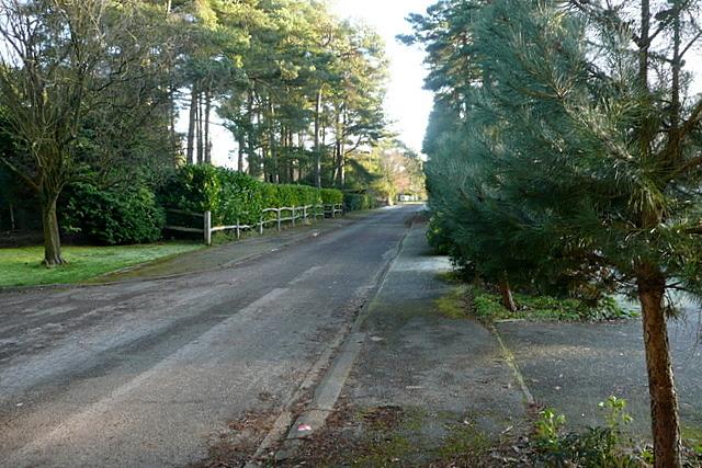 Road at Kingswood Firs