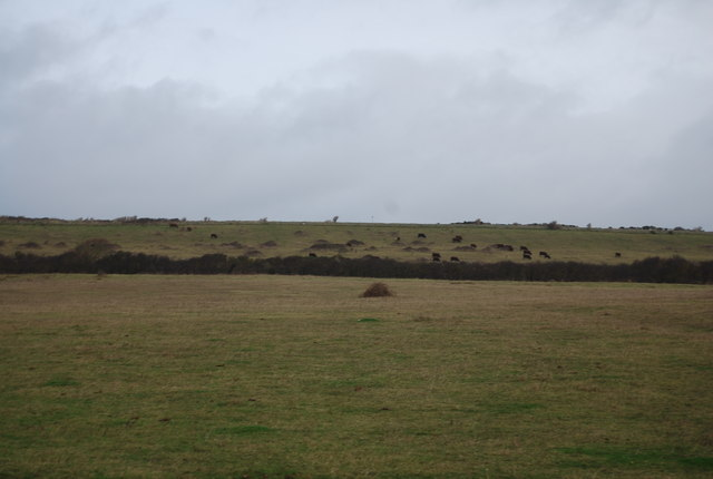 Cattle grazing in the distance