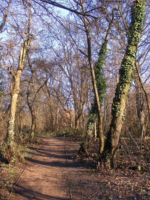 Peascroft Wood Path