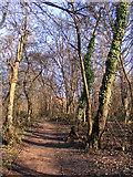 SO9596 : Peascroft Wood Path by Gordon Griffiths