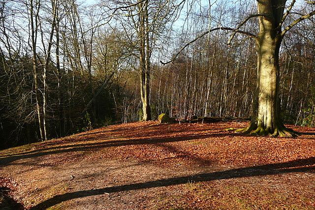 Bramshott Common