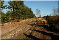 SU8435 : Bridleway on Ludshott Common by Graham Horn
