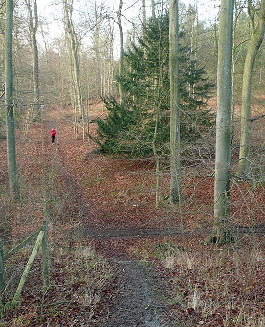 Runner in Great Cookshall Wood