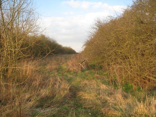Between road and abandoned railway
