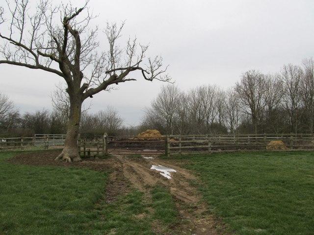 Harborough Magna Farmland