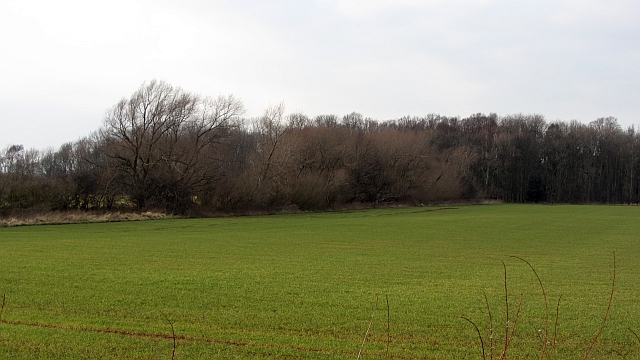 Redhouse Wood and winter cereals