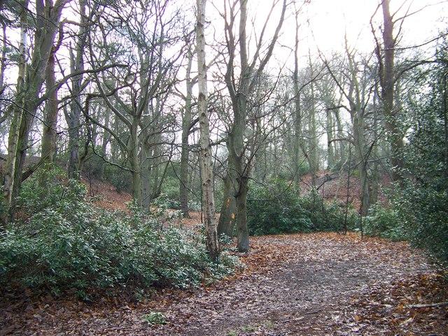 Jocelyn's Wood - near Sandringham