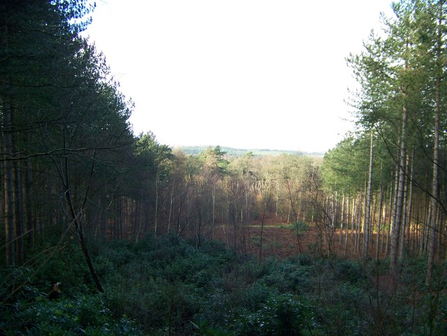 View point in the Sandringham Estate forest