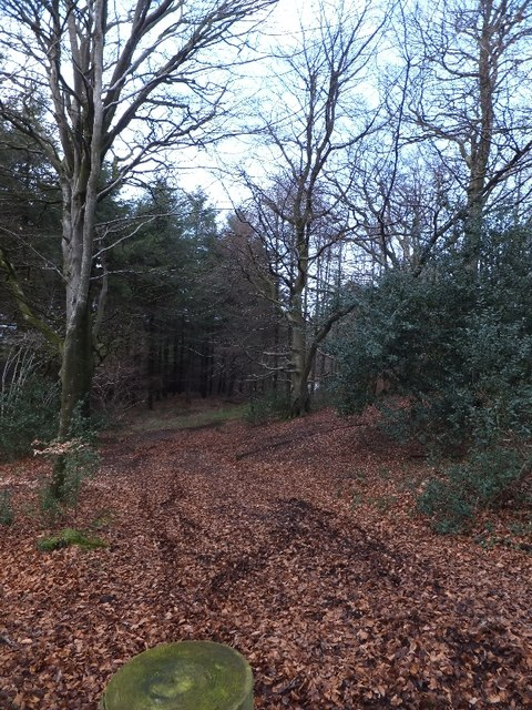 Track into the woodland on Humber Down