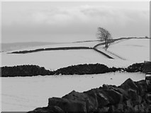 SK2169 : Wintry landscape north of Bakewell by Peter Barr