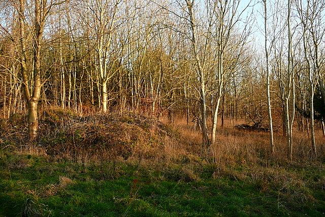 Coppice in Hearton Wood