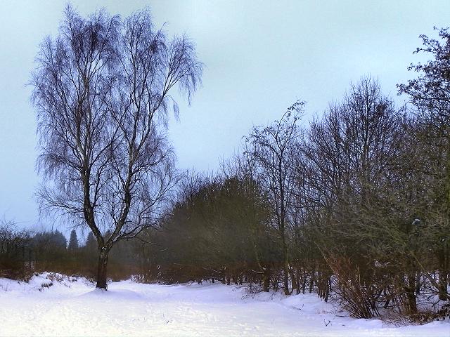 Tree Behind Gorsefield School