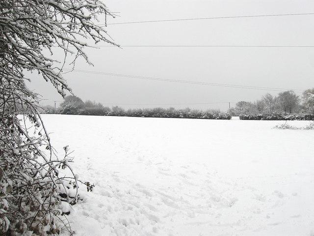Lane Field