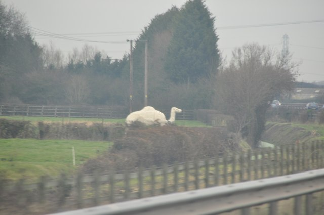 Sedgemoor : Camel Statue
