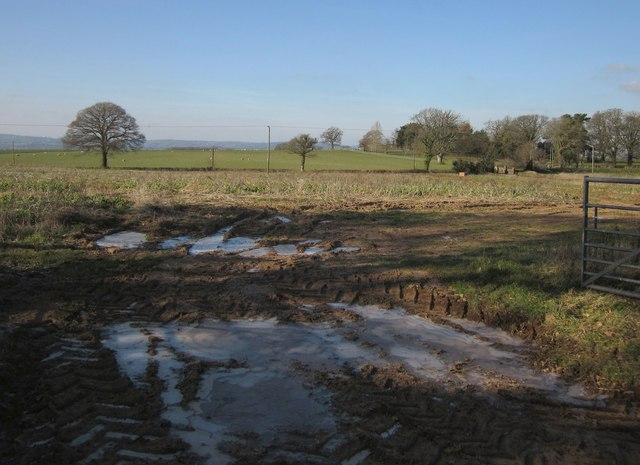 Field by Yew Wood Cross