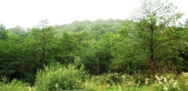 Fiordhan Forest