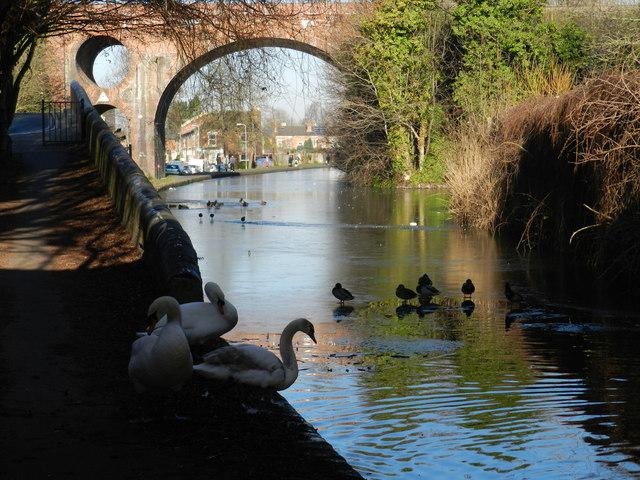 Three swans at Bridge 9, Worcester & Birmingham Canal