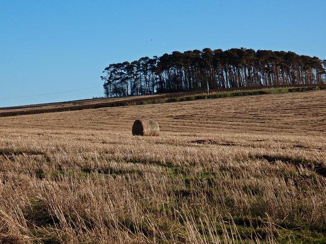 Straw Bale Near Wee  Macnairston