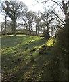 ST0809 : Open woodland below Blackborough Wood by Derek Harper