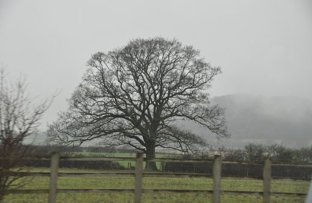 Gloucester : Tree and Field