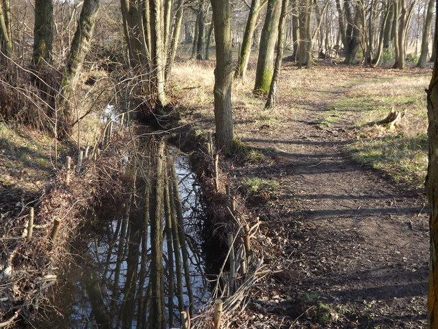 Woodland Stream, Whitmoor Common