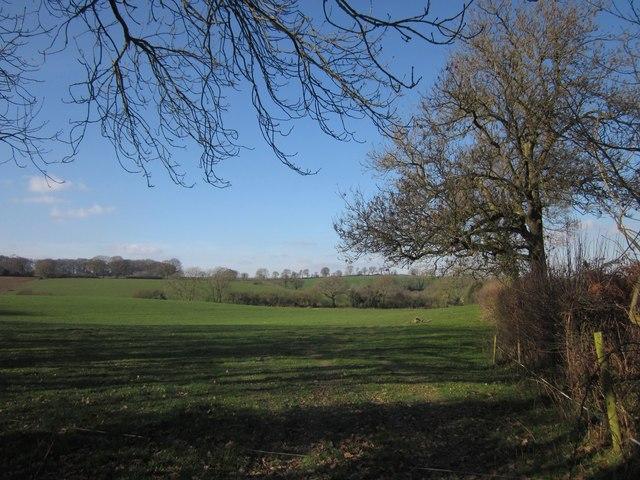 Field west of Allhallows Farm