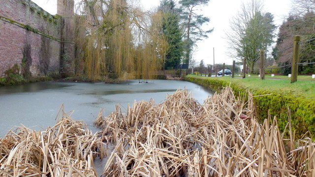 Frozen pond at Bollitree