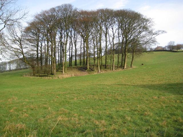 Tree clumps off Long Lane Bollington