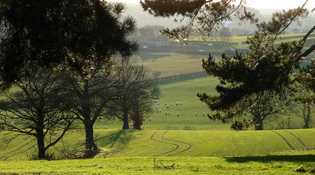 View towards Stainborough Folds