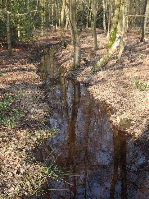 Drain on Whitmoor Common