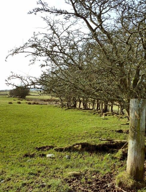 Knockbrex Moor