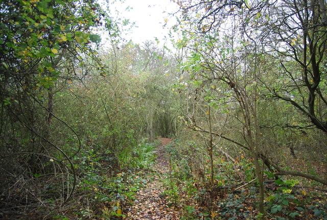 Path in High Halstow NNR