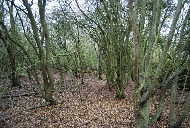 Woodland, Northward Hill