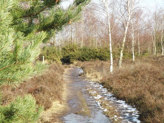 Whitmoor Common Track