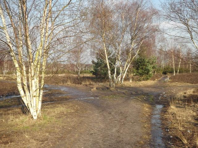 Track Junction, Whitmoor Common