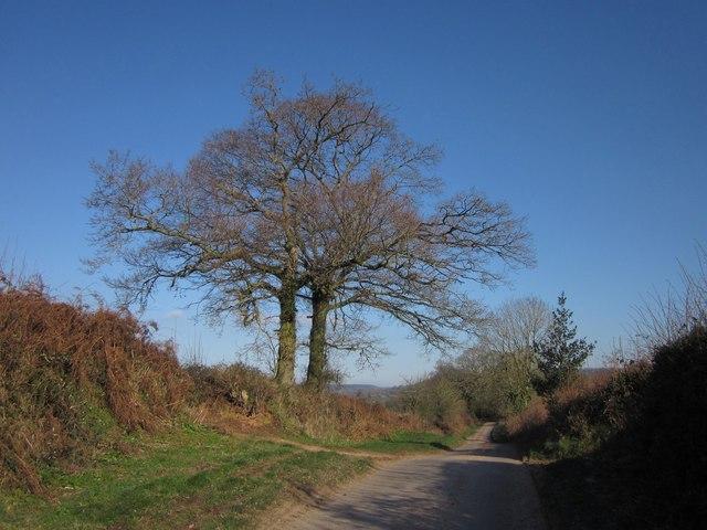 Lane to Allhallows Farm