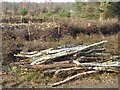 SU9853 : Log Pile, Whitmoor Common by Colin Smith