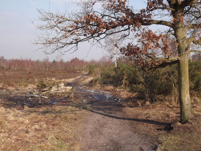 Open Heathland, Whitmoor Common