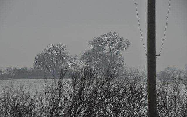 Wychavon : Telegraph Pole & Field