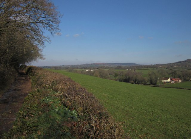 Field by the green lane, Ashill