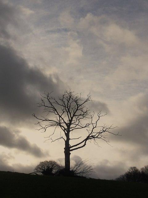 Dead tree .