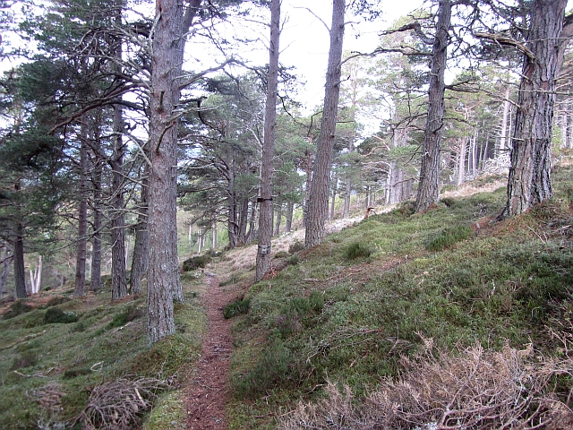 Path above the Allt a' Mharcaidh